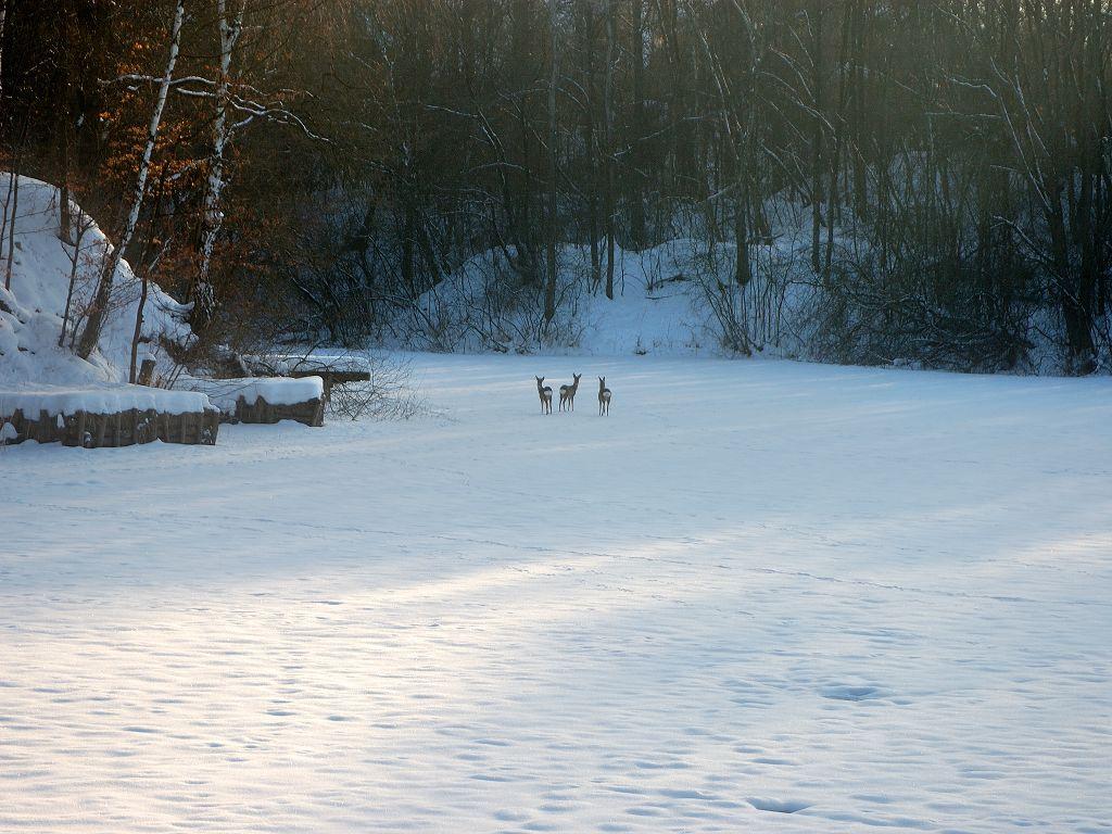 Winterbild 2