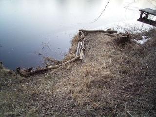 winterschaden-2011-4
